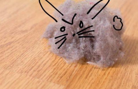 8 Ways to Keep the Dust Bunny Away